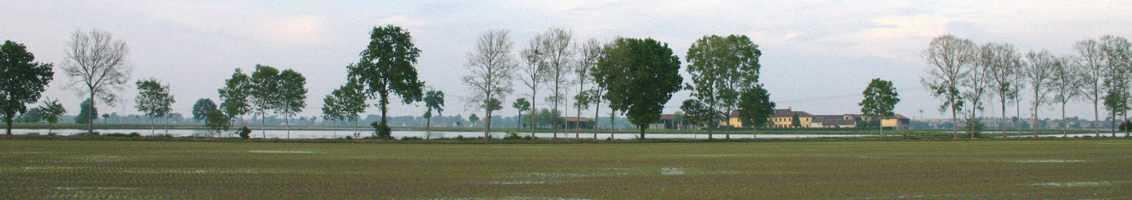 Risaia nel parco agricolo
