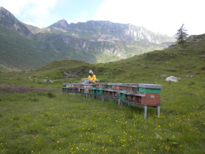 apicotura biologica
